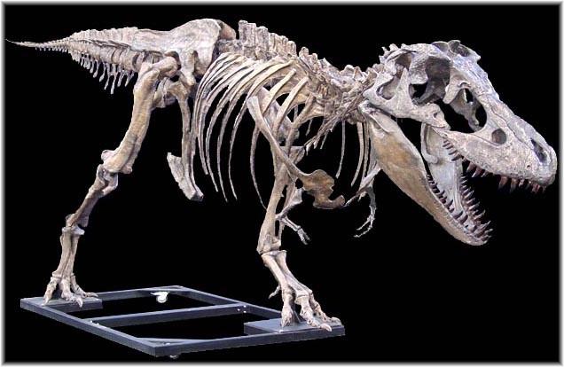 Tarbosaurus3